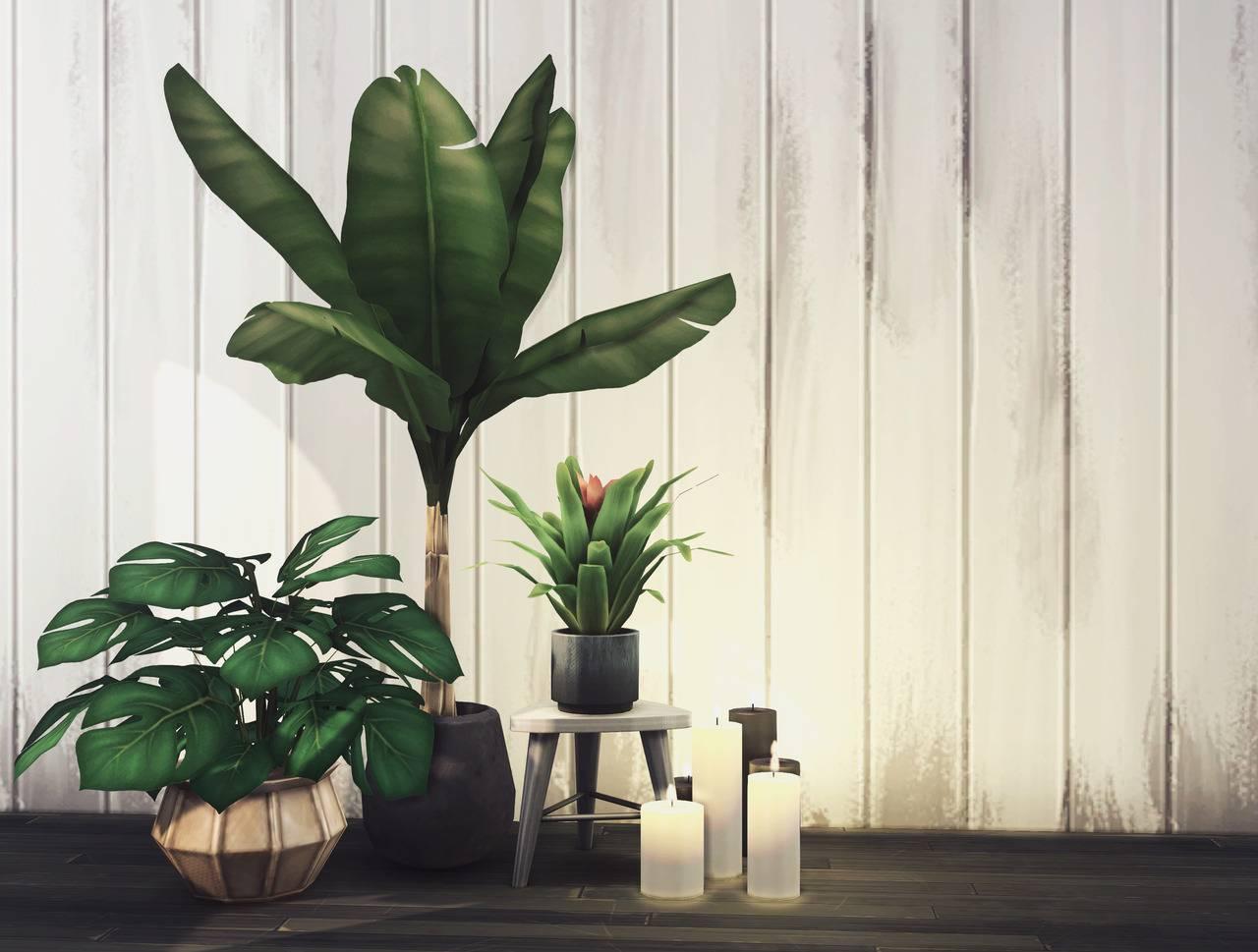 Растения и свечи - 5K Follower Gift